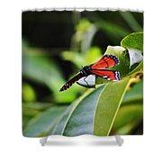 King Of The Butterflies Shower Curtain
