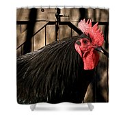 King Of The Coop Shower Curtain