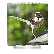 King Of The Feeder Shower Curtain