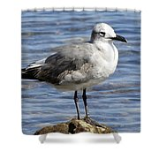 King Of The Rock Seagull Shower Curtain