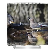 King Of The Rock Shower Curtain