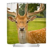 King Of The Spotted Deers Shower Curtain