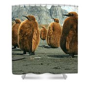 King Penguin Chicks Shower Curtain