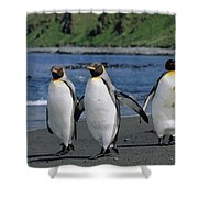 King Penguin Trio On Shoreline Shower Curtain