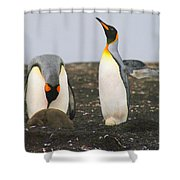 King Penguins With Chick And Egg Shower Curtain
