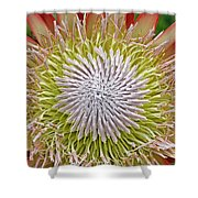 King Protea Flower Macro Shower Curtain