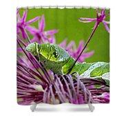 King Swallowtail Caterpillar Shower Curtain