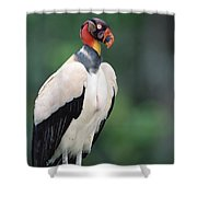 King Vulture In Breeding Colors Shower Curtain