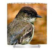 Kingbird Chillin Shower Curtain