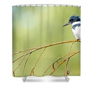 Kingfisher On A Willow Shower Curtain