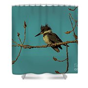Kingfisher On Limb Shower Curtain