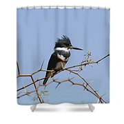 Kingfisher On Mesquite Tree Shower Curtain