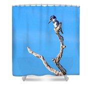 Kingfisher Perch Shower Curtain