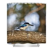 Kingfisher-top-end Australia Shower Curtain