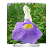 King's Mantle Flower  6 Shower Curtain