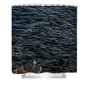 Seagulls At Cliffs Ready To Fish In Mediterranean Sea - Kings Of The World Shower Curtain