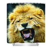 Kings Roar Shower Curtain