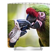 Kissing Macaws Shower Curtain
