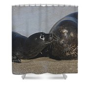 Kissing Seals Shower Curtain