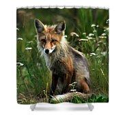 Kit Red Fox Shower Curtain