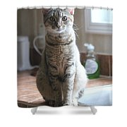 Kitchen Cat Shower Curtain