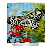 Kite Butterfly Shower Curtain