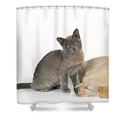 Kitten And Puppy Lying Together Shower Curtain