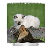 Kitten And Puppy Playing Shower Curtain