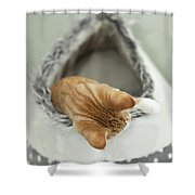 Kitten In An Igloo Shower Curtain