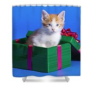 Kitten In Gift Box Shower Curtain
