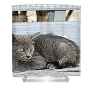 Kitten In Hydra Island Shower Curtain
