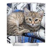 Kitten In The Blanket Shower Curtain