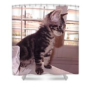 Kitten On Alert Shower Curtain