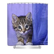 Kitten With A Curtain Shower Curtain