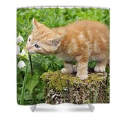 Kitten With Flowers Shower Curtain
