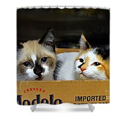 Kittens In A Box Shower Curtain
