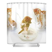 Kittens In Bowl Shower Curtain