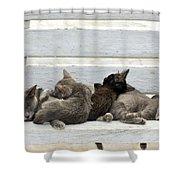 Kittens In Hydra Island Shower Curtain