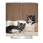 Kittens Lying With Puppy Shower Curtain