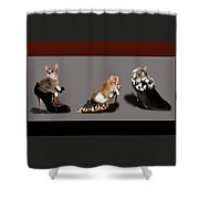 Kittens In Designer Ladies Shoes Shower Curtain