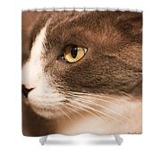 Kitty Boy Shower Curtain