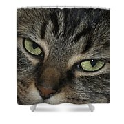Kitty Cat Eyes Shower Curtain