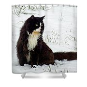 Kitty Cat In The Snow Shower Curtain