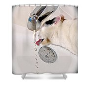 Kitty Likes Those Water Drops Shower Curtain