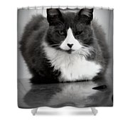 Kitty On A Car Shower Curtain