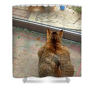 Kitty Watches The Squirrel Shower Curtain