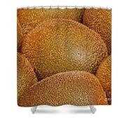 Kiwi Fruit Shower Curtain