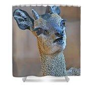 Klipspringer Portrait Shower Curtain