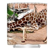 Kneeling Giraffe Shower Curtain