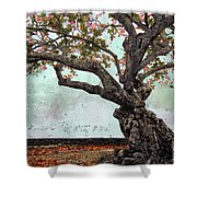Knotted Tree Shower Curtain by Daniel Hagerman